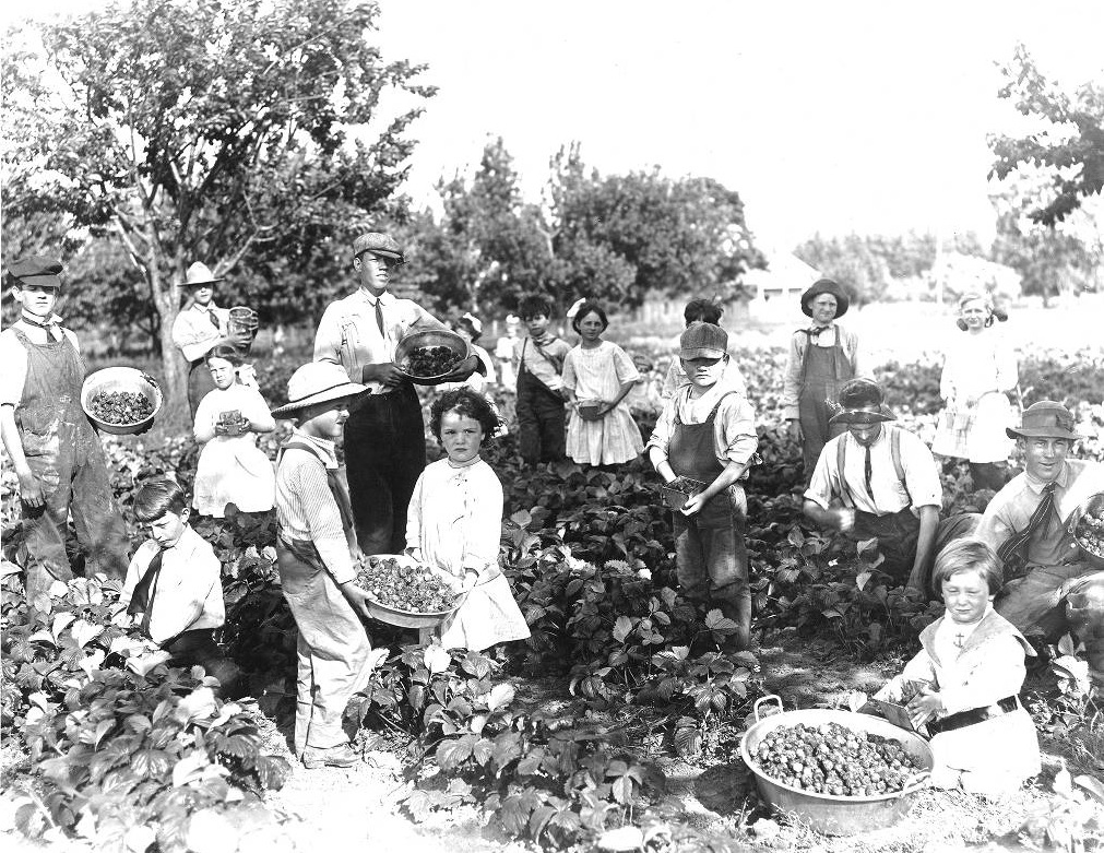 Over a dozen children in a strawberry field holding baskets and bowls of strawberries they picked.