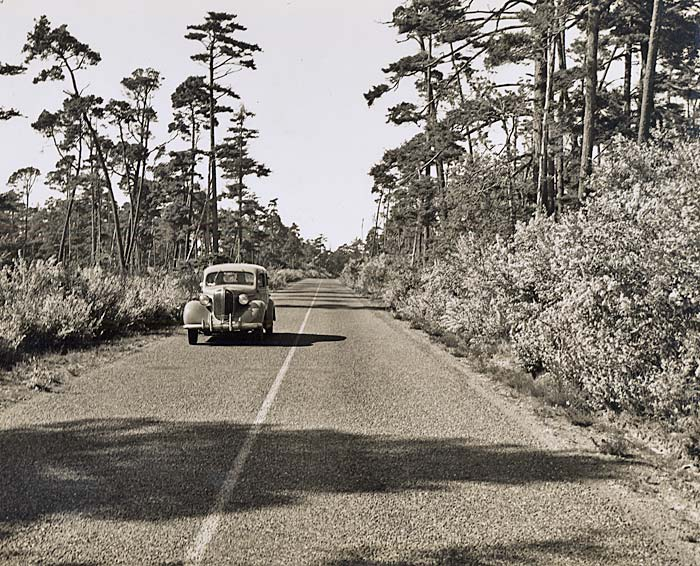 A single car travels a 2 lane road with vegetation and tall evergreens on each side.
