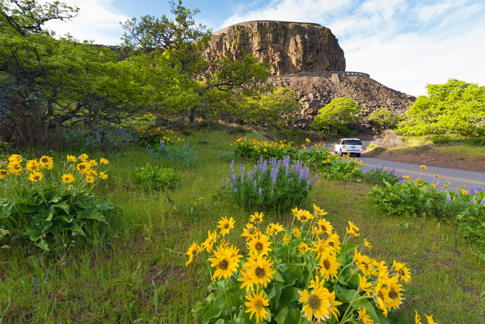 Wildflowers at Rowena Crest
