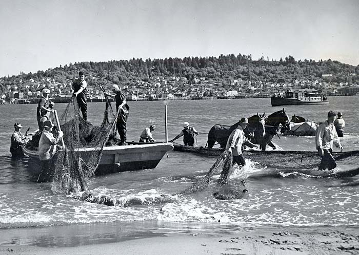 Men and horses drag boats and fishing nets through the water along the shore.