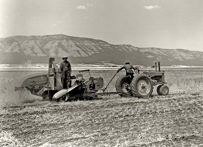 Two men use a tractor and farm equipment to harvest peas from a dusty field.