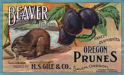 "Drawing of beaver chewing wood next to a water body with large plums on a branch to the right. Reads ""Oregon Prunes"""