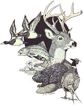 Drawing of 2 ducks, a fish, a beaver, a pheasant, and the head of a dear with antlers.