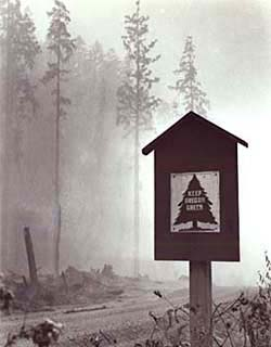 "A smoky forest background with a sign on the side of the road that says ""Keep oregon Green."""