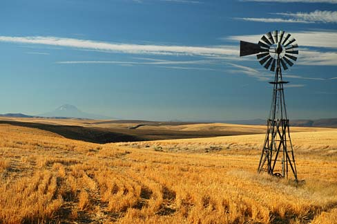 Golden grain field with old windmill.