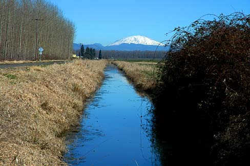 Canal with water in it stretching out towards horizon and Mt. St. Helens with snow in the background.