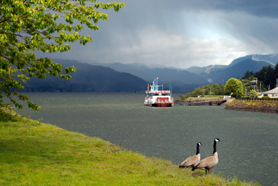 geese near edge of Columbia River and Columbia Gorge Sternwheeler in the background