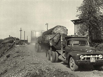 A 1930s or 40s truck with a flat bed attached to the back with large trees that have been cut down laying along the bed.