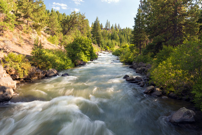 River with white water and many rocks along sides. A mix of evergreen and deciduous trees line the banks.