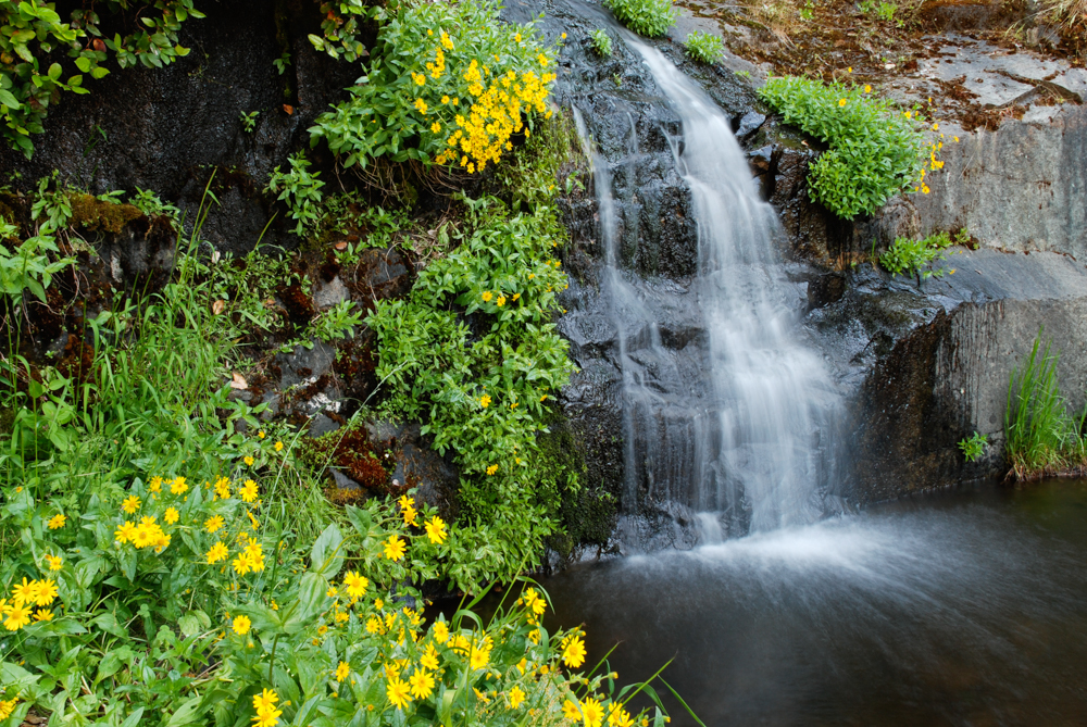 yellow flowers next to waterfall