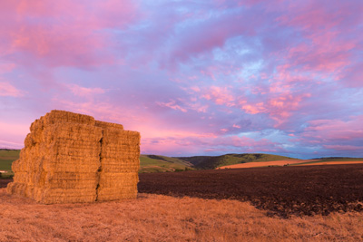 bales of hay and pink clouds