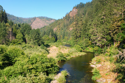 Cow Creek and evergreen trees