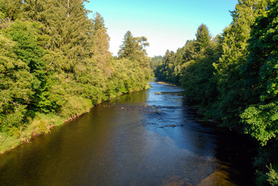 Siletz River surrounded by evergreen trees
