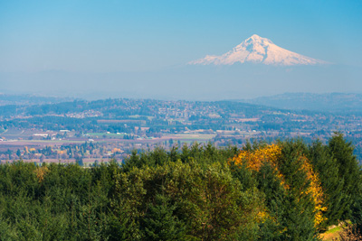 green and yellow trees with Mount Hood in the distance