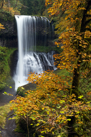 yellow autumn leaves in the foreground with waterfall